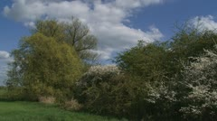 Blackthorn and hawthorn in Dutch river landscape + pan dike Stock Footage
