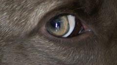 Dog eye Stock Footage