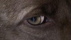 Dog s eye then zoom out Stock Footage