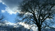Stock Video Footage of clouds trees tl 3