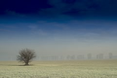 Landscape with a single tree on the winter field, Time Lapse HD Stock Footage