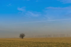 Landscape with a single tree in the field, Time Lapse HD Stock Footage