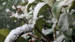 snow leaves - stock footage