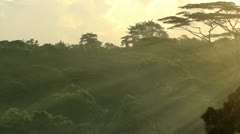 Sunrise with a Jungle Canopy Stock Footage
