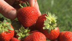 Strawberry 06 Stock Footage