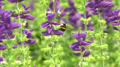 LP Bees 03 Stock Footage