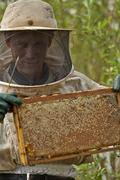 Bee Keeper showing wax panels laden with honey - stock photo