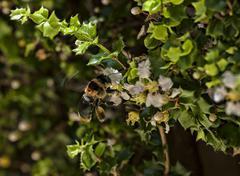 Worker bee gathering pollen Stock Photos