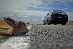 Road Kill Stock Photos