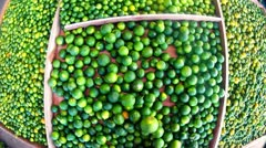 Fresh Limes Stock Footage