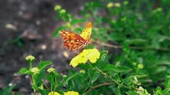 Moody Butterfly Take Off Stock Footage