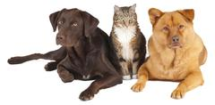 Pets together Stock Photos