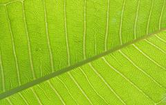 Stock Photo of green leaf texture