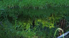 Shaded Grassy Spring With Glowing Reflected Ferns Stock Footage