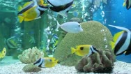 Stock Video Footage of aquarium fish