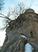 Stock Photo of tree grows in the ancient cathedral
