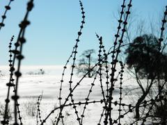 bur and empty nest in winter - stock photo