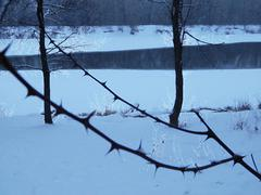 briar thorns amid the winter river - stock photo