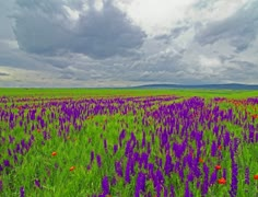 4K field of flowers and the cloudy sky Stock Footage
