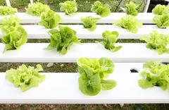Many kinds of hydroponic system Stock Photos