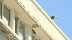 751. beautiful seagull standing on a roof - stock footage