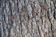 tree bark texture for design overlay element, background, wallpaper - stock illustration