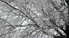 Freezing Rain icing a tree. - stock footage