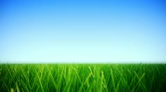 Grass Field loopable background. Stock Footage