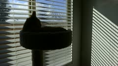Time Lapse of Cat in Window with creeping shadows - stock footage