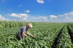 Agronomy Stock Photos