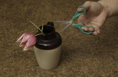 Green Scissors Attacking Helpless Tulip Stock Photos