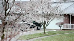 Freezing Rain on tree in foreground - shallow depth of field. - stock footage