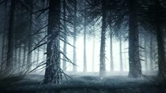 Spooky forest Stock Footage