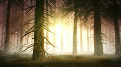 Spooky forest yellow Stock Footage