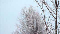 Panning down tree during heavy Freezing Rain storm. - stock footage