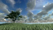 Stock Video Footage of Solitary tree on green meadow, timelapse clouds