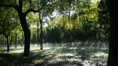Grass water spray in trunk woods forest,sunshine on lawn backdrop background. Stock Footage