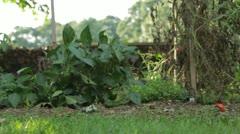 Barefoot Walking In Garden Stock Footage