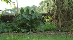 Barefoot Walking Through Garden Stock Footage