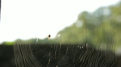 Spider Weaving Its Web Stock Footage