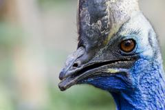 a portrait of an ugly bird - stock photo