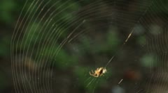 Spider Weaving Its Web - stock footage