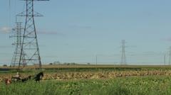 Horse Drawn Buggy Riding Through Farmland Stock Footage