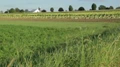 Grass Blowing in Farm Field Stock Footage