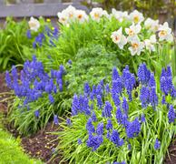 spring garden flowers - stock photo