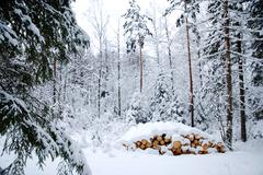 snowy logpile - stock photo