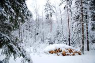 Snowy logpile Stock Photos