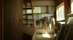 Horse Harnesses Hanging in Shed Stock Footage