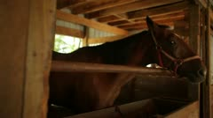 Horses in Their Stalls Stock Footage
