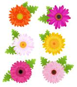 6 colorful daisies with leaves, isolated on white Stock Illustration